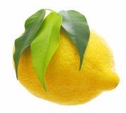 Лимон с зелеными лист Стоковое Изображение