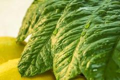 Лимон с фото листьев стоковое изображение rf