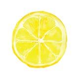 Лимон иллюстрация штока