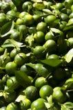 Лимон Calamansi Стоковые Изображения RF