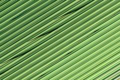 линии абстрактной предпосылки цветастые Стоковая Фотография