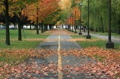 Линии деревьев в парке стоковое фото