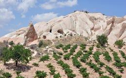 Линии деревьев и утесов, долины красной розы, Cappado Стоковое Изображение RF