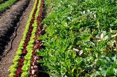 Линии заводов в vegetable заплате стоковое фото rf