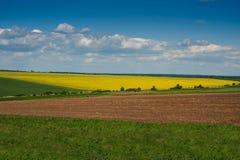 Линии земли и rapeflowerfield благоустраивают панорамный взгляд Стоковое Изображение RF