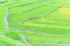 Линии и путь фермы Стоковое Изображение