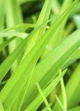 Линии и тени травы стоковое изображение rf