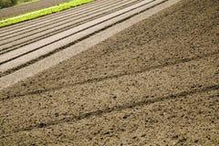 линии почва Стоковое Фото