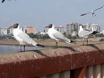 Линии 3 птиц стоковая фотография