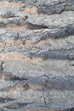 Линии текстуры/предпосылки Стоковая Фотография RF