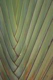 линии Стоковые Фото