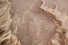 Линии Nazca припевая птицу Стоковое фото RF