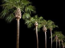 линия валы parkway ладони ночи стоковые изображения