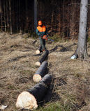 линия вносит тимберс в журнал lumberjack стоковое фото