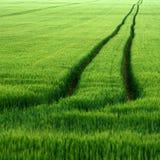 Линия в поле Стоковые Изображения