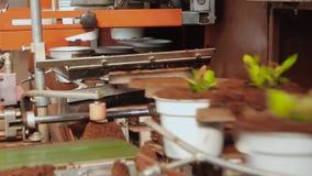 Линия в современном парнике, парник с автоматизированным транспортером, цветки транспортера в баках на транспортере акции видеоматериалы
