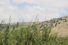 Линия горизонта с деревьями стоковые изображения