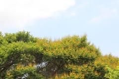 Линия горизонта с деревьями стоковые фото