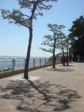 Линия голубое небо и море сосны на Haeundae приставает к берегу Стоковые Изображения