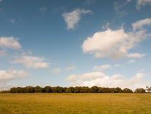 Линия деревьев земли травы красивой пустой равнины фермы плоская и голубой sk Стоковое Фото