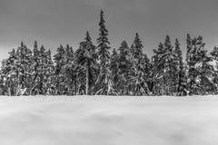 Линия деревьев в Лапландии, Швеции стоковые изображения