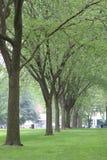 Линия деревьев Ейль внутри на университетском кампусе Стоковое Изображение