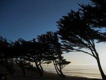 Линия деревьев побережье на заходе солнца Стоковое Изображение