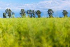 Линия деревьев Стоковое Фото