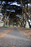 Линия деревьев Стоковые Изображения