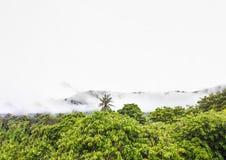 Линия лес и montain верхней части куста дерева взгляда в белом тумане Стоковая Фотография