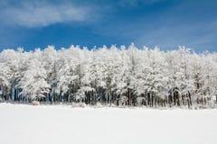 Линия замороженных деревьев Стоковое Изображение