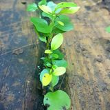 Линия зеленых листьев Стоковые Фотографии RF