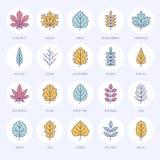 Линия значки листьев осени плоская Лист печатают, рябина, дерево березы, клен, каштан, дуб, сосна кедра, липа, guelder подняли иллюстрация вектора