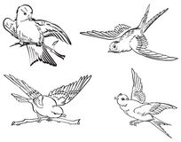 Линия искусство птиц Стоковая Фотография