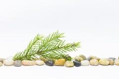 Линия камешков и ветви зеленого цвета елевой стоковые изображения rf