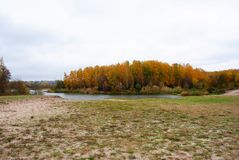 Линия леса желтых берез на противоположной стороне речного берега с тростниками вдоль отражать в воде, силуэте города в стоковое изображение rf