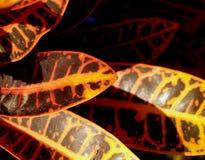 линия листьев Стоковое Изображение