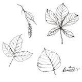 Линия нарисованная рукой космос экземпляра ART Эскиз вектора чернил различных листьев осени бесплатная иллюстрация
