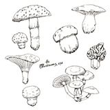 Линия нарисованная рукой космос экземпляра ART Эскиз чернил различных грибов осени бесплатная иллюстрация