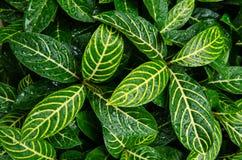 Линия на листьях Стоковая Фотография