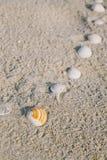 Линия на пляже - винтажный тон Seashell Стоковые Изображения RF