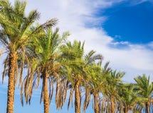 Линия пальм Стоковая Фотография RF