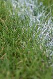 линия покрашенная белизной в траве на спортивной площадке Стоковое Изображение RF