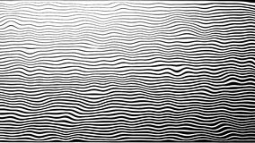 Линия предпосылка зебры анимации движения картины 4K На белой предпосылке, в круге волны, черно-белый, morphing сток-видео