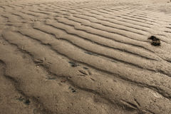 Линия птицы на песке Стоковое фото RF