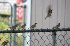 Линия птицы Стоковое Изображение RF