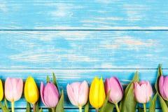 Линия розовых и желтых тюльпанов на голубой деревянной предпосылке Стоковое Фото