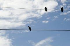 линия сила ворон Стоковое Фото