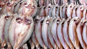 Линия сухая рыба Стоковая Фотография RF