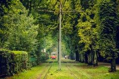 Линия трамвая бежит в чащах деревьев Старый красный трамвай на расстоянии перспективы Стоковое фото RF
